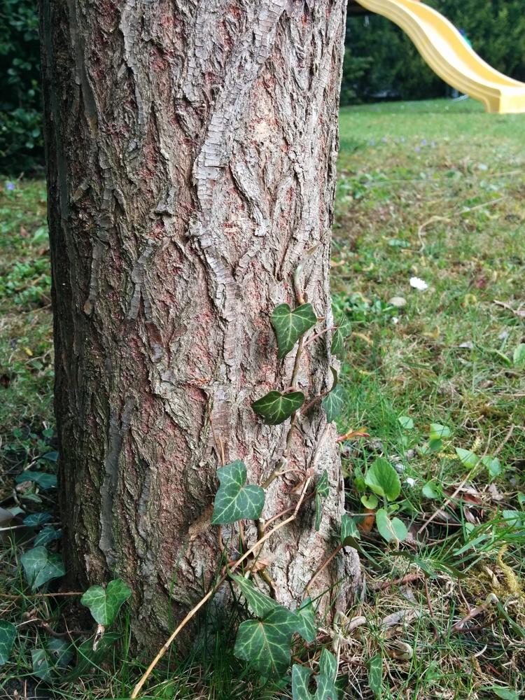 Kész a fa :)